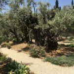 Mount of Olives photo